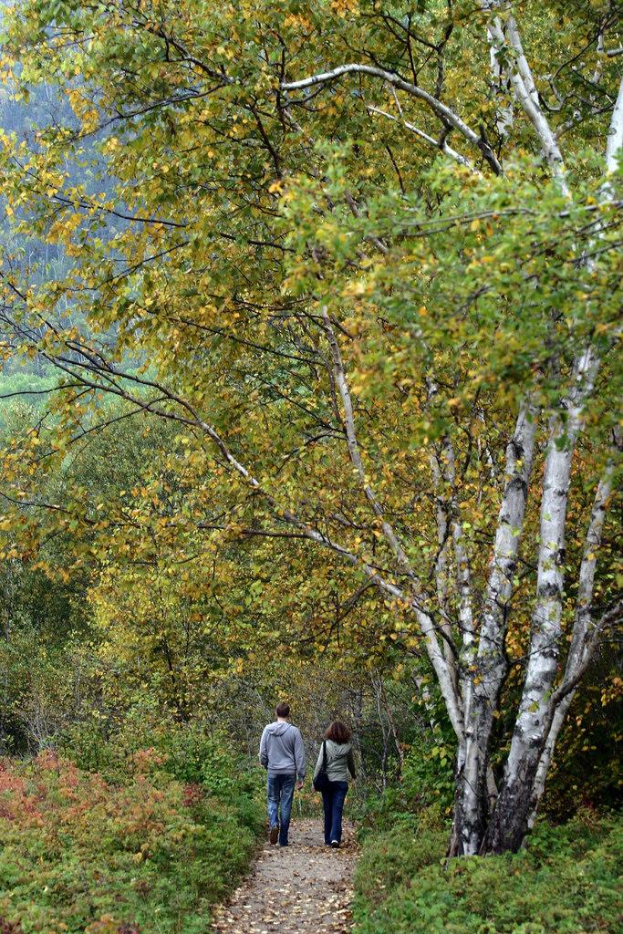 randonnée dans les forêts du Quebec