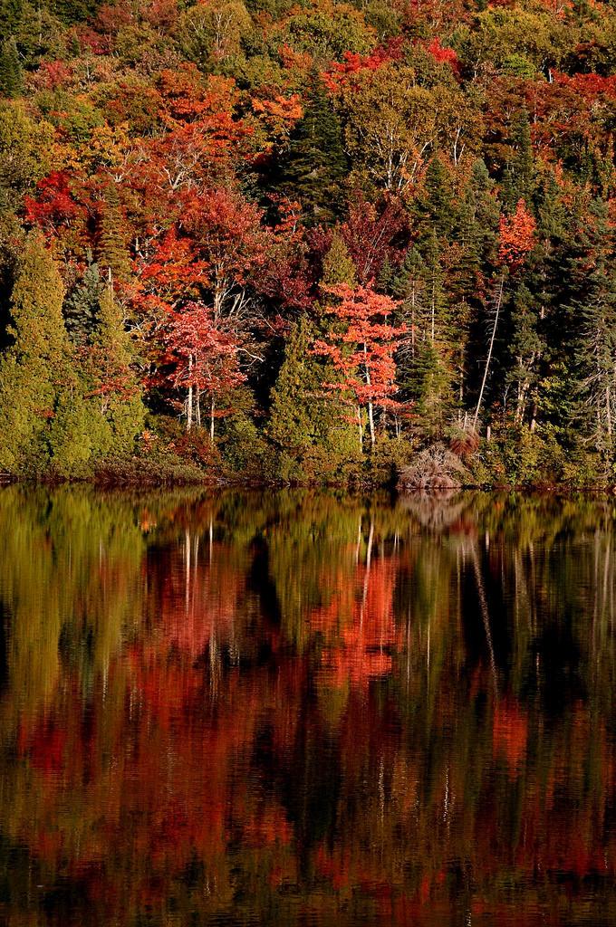 reflets rouges dans l eau arbres du Canada