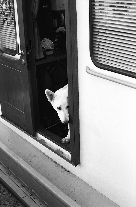 Photographie argentique d'un chien blanc sur un bâteau