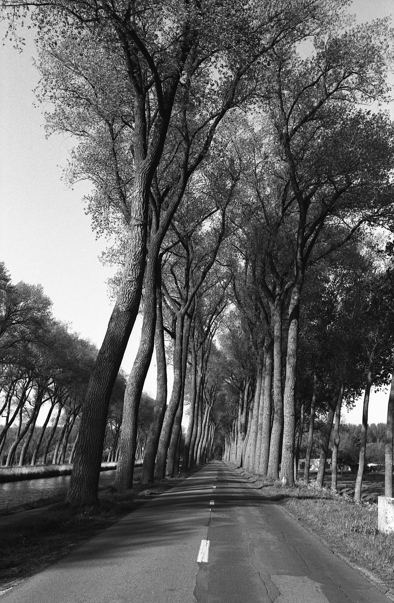 Tirage noir et blanc allée d'arbres