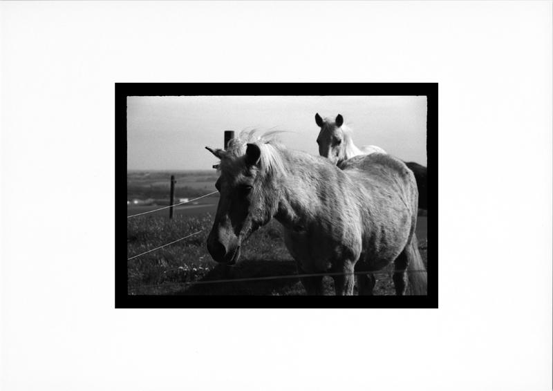 photographie argentique - tirage noir et blanc - chevaux