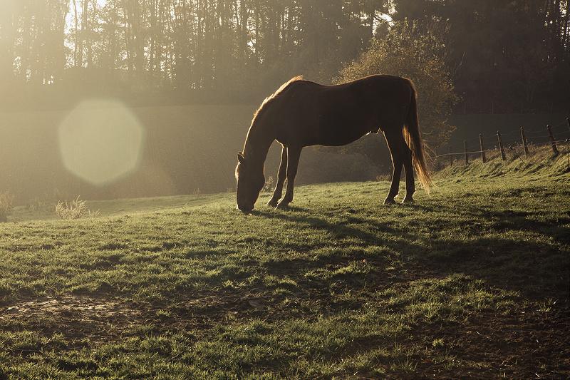 apprendre photo contre-jour chevaux prairie et soleil