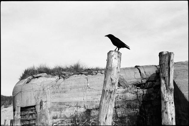 Photographe argentique noir et blanc - Englos