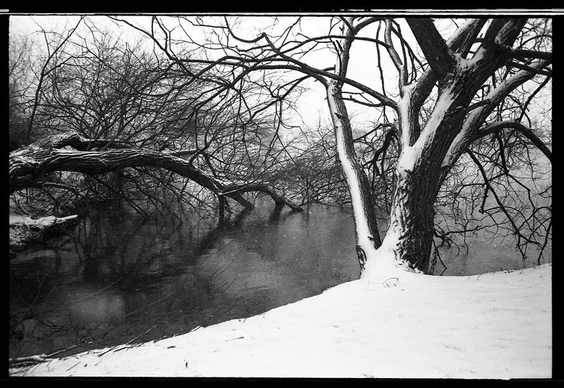 Neige et larbres couchés photo noir et blanc argentique - APX 100